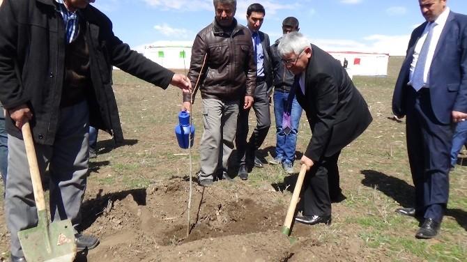 Kars'ta 3 Bin Ceviz Fidanı Toprakla Buluştu