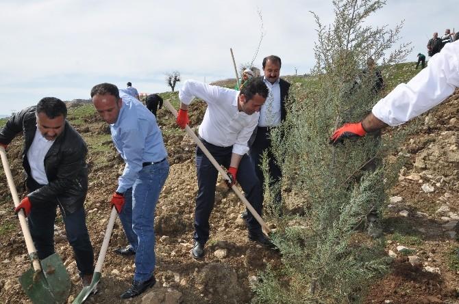Şırnak Belediyesi Ağaç Dikim Kampanyası Başlattı
