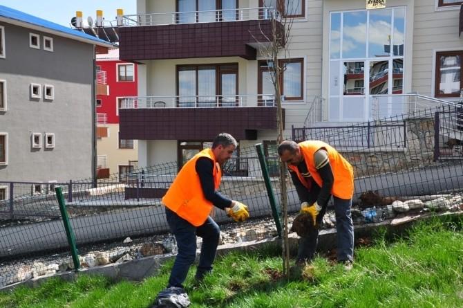 Tunceli Belediyesi Yeşillendirme Çalışmalarını Sürdürüyor