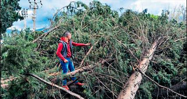 Hortum 30 ağacı ve direği devirdi