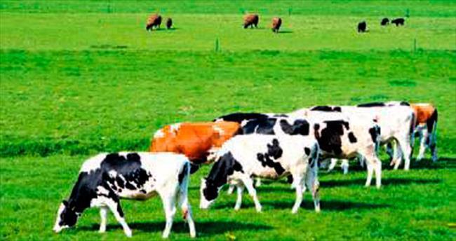 Hayvancılık 10 yılda %40 büyüdü