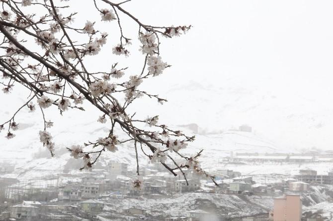 Nisan Karı Meyve Ağaçlarına Zarar Verdi