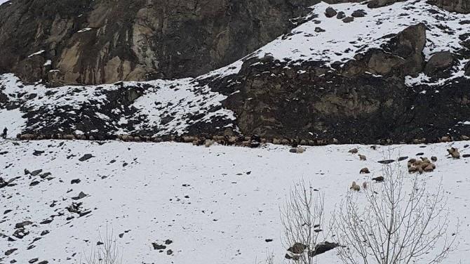 Kar Yağışı Nedeniyle Mahsur Kalan Küçükbaş Hayvanlar Kurtarıldı