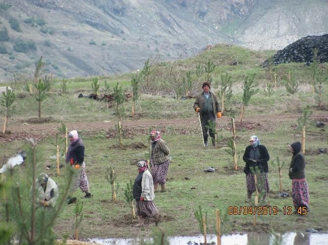 32 Madenciye Mezar Olan Maden Ormana Çevriliyor