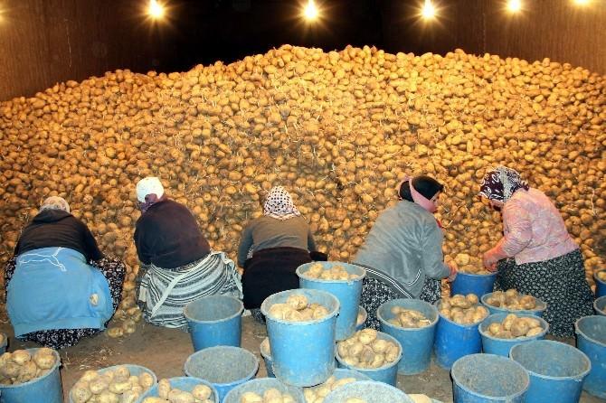 """""""Kriz Olabilecek Patates Sıkıntımız Yok"""""""