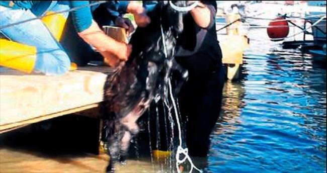 Göle atlayan keçiyi itfaiye kurtardı