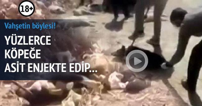 Köpeklere asit enjekte edip işkenceyle öldürdüler
