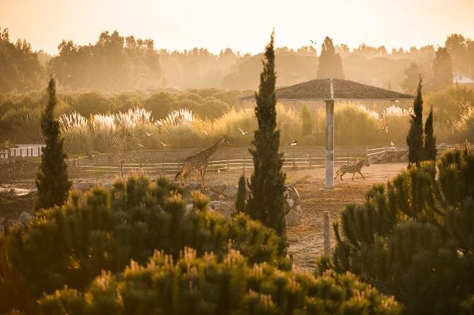 İzmir Doğal Yaşam Parkında Yeni Rekor