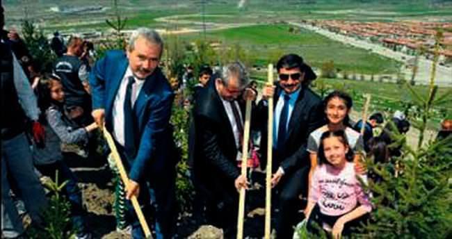 Keçiören'de 2 bin 71 ağaç toprakla buluştu