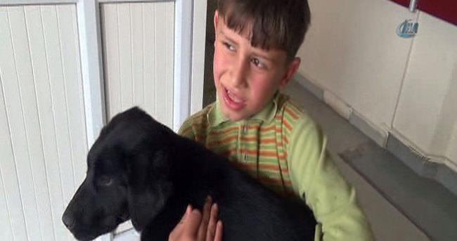 Acı çeken köpeği acil servise getirdi