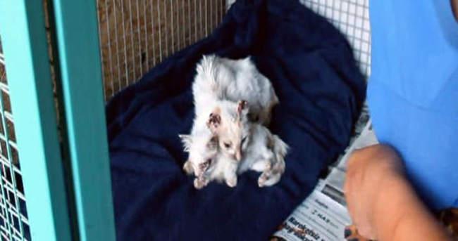 Anne ve yavru kediye işkence
