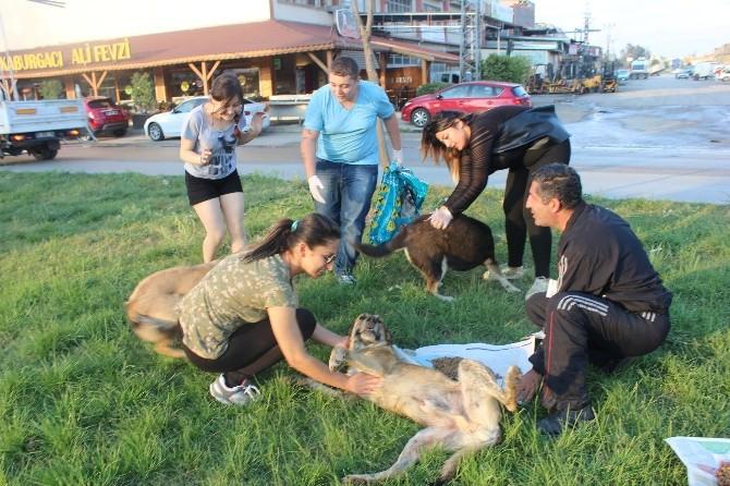 Sokak Hayvanını Besleyip Tedavi Ettiler