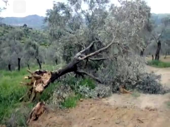 """Dr. Aydın: """"Ölümsüz Ağaçlara Ve Yaşama Yapılan Müdahaleleri Kınıyoruz?"""""""
