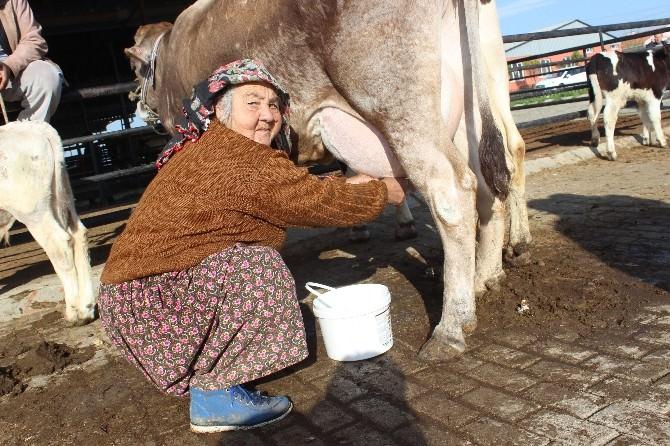Girişimci Diye Buna Denir, Hiç İneği Yok Yüzlerce Litre Süt Satıyor