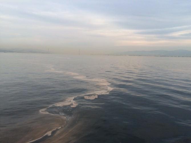 Denizde Kahverengi Tabaka Yalova'da Da Ortaya Çıktı