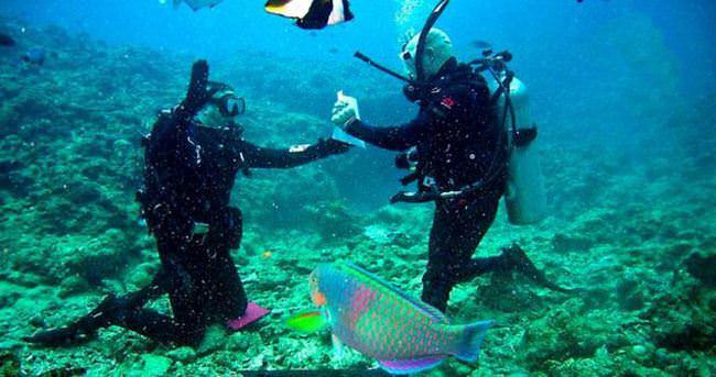 Mavi dünyanın gizemini Muğla kıyılarında keşfediyorlar
