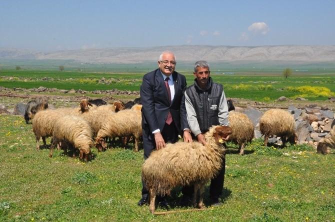 Erdoğan, Dağdaki Çobanın Da Milletvekiliyim