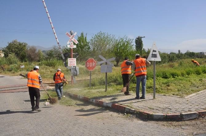 Nazilli'de Cadde Ve Bulvarlardaki Yabani Otlar Temizleniyor