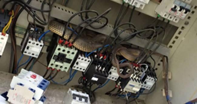 Elektrik kesintisinin nedeni yılanmış