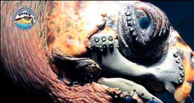 Caretta carettaya '3D çene protezi' takıldı
