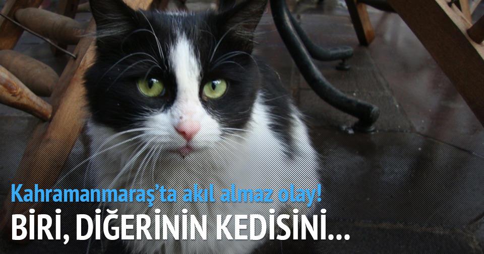 KEDİ KAVGASI FECİ BİTTİ!