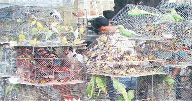Kuşlar hapsedilemez