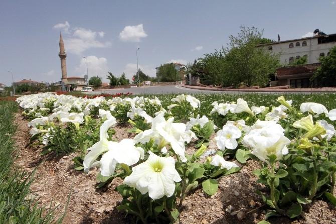 Talas Rengarenk Çiçek Açtı