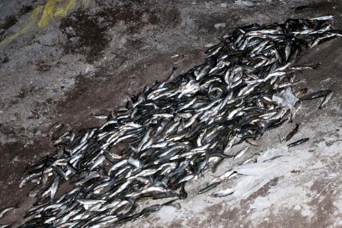 Muradiye'de Kaçak Balık Operasyonu