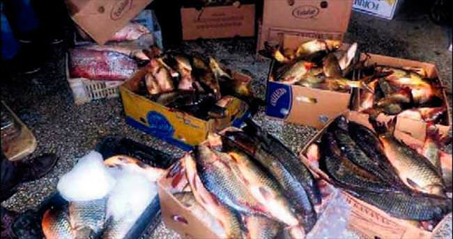 Ankara'da 300 kilo balık imha edildi