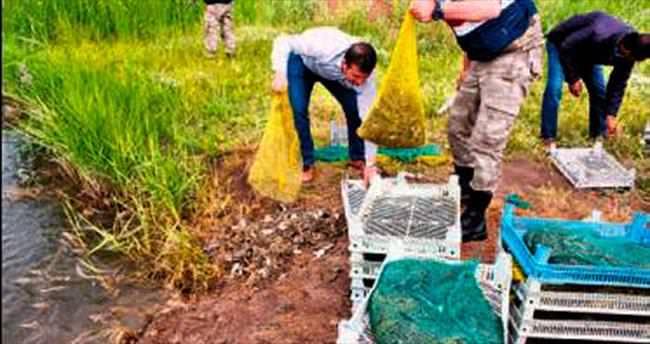 Kaçak kurbağa avlayanlara ceza