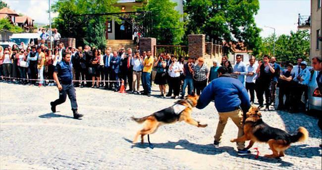 Dedektör köpek K9'lar Beypazarı'nda şov yaptı