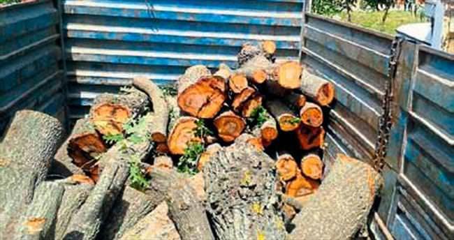 Kaçak ağaç kesimi jandarmaya takıldı