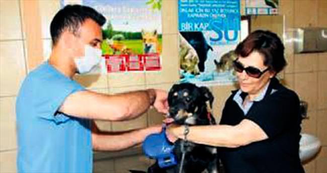 Çankaya'da 2 bin hayvana tedavi