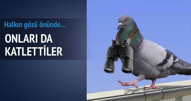 Güvercinleri 'ajan' diye katlettiler