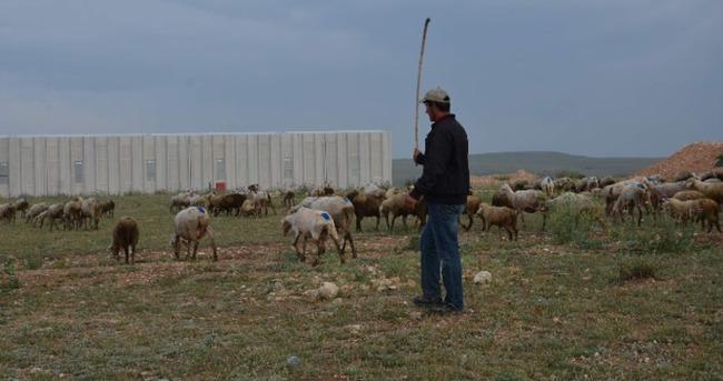 Eskişehir'de hayvan katliamı sürüyor