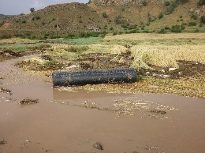 Çeltik Arazilerini Sel Vurdu
