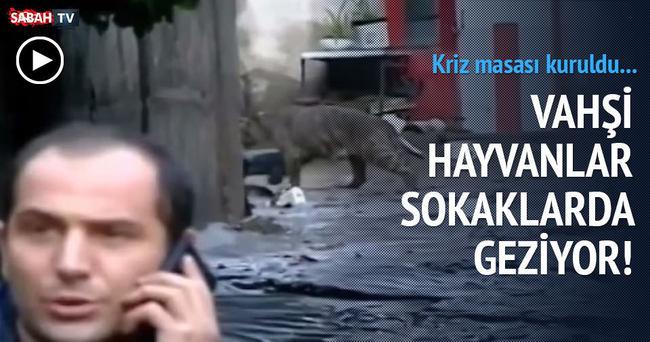 Gürcistan'ın başkenti Tiflis'te sel!