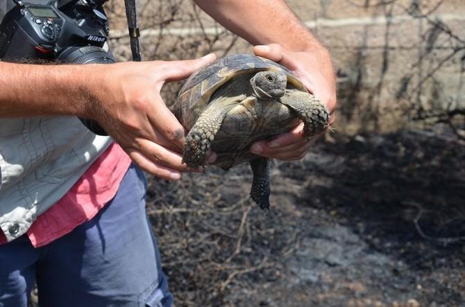 Kaplumbağayı İtfaiye Eri Kurtardı