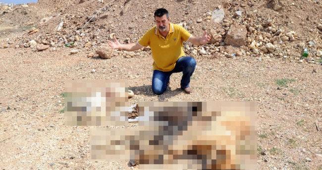 Mersin'de köpek katliamı