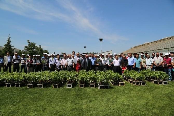 Tokat'ta Çiftçilere 10 Bin Asma Fidanı Dağıtıldı