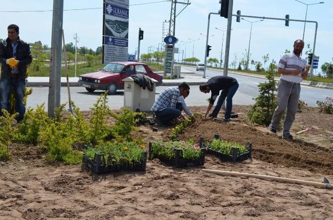 Adilcevaz Belediyesi Çiçeklerle İlçeyi Güzelleştiriyor
