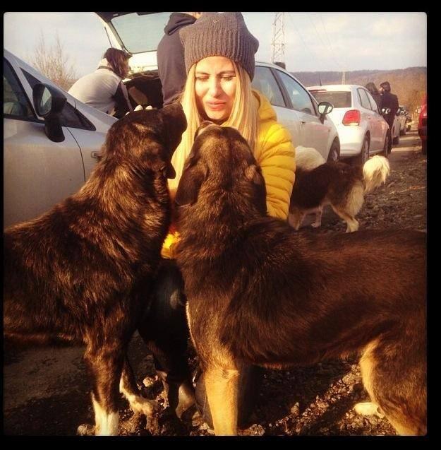 Toplanan Bağışlar Sokak Hayvanlarına Umut Oluyor