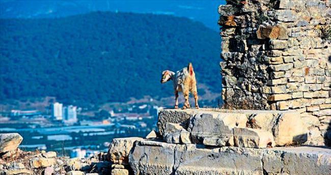 Antik keçiler