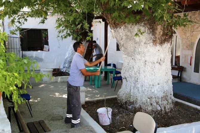 Bodrum'daki 90 Caminin Temizliği Ve Bakımı Yapılıyor