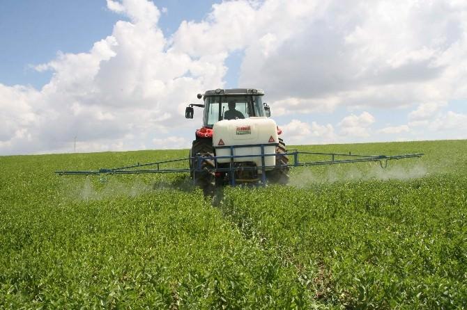 Çiftçiler Aspir Bitkisine Zarar Veren Tırtıl İle Zirai Mücadele Yapıyor