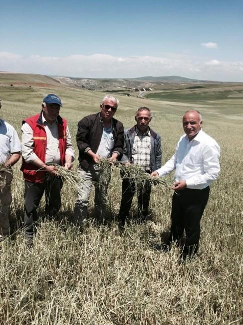 İç Anadolu'nun Tarım Ambarları Haymana Ve Polatlı'da Düşüş Var