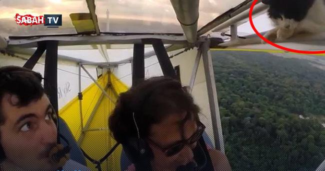Uçağın kanadında kedi var!