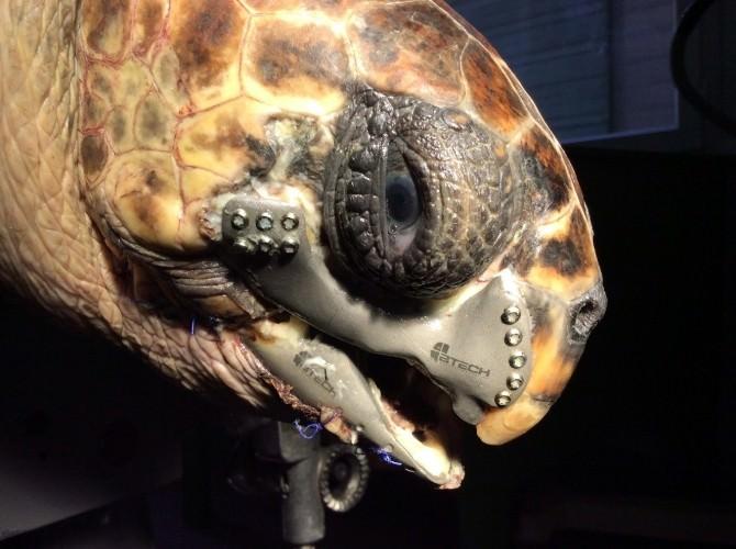 Caretta Carettaya 3D Çene Protezi Ödül Getirdi