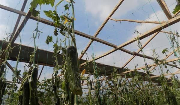 Amasya'daki Dolu Yağışının Bilançosu Açıklandı