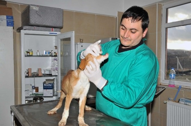 Mamak'ta Sokak Hayvanları Rehabilite Ediliyor